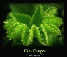 Dew Drops by cinicool