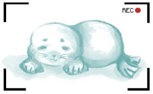 Draw a seal contest~ by cheapjam