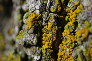 lichens on tree B 6.25.11 by serealis