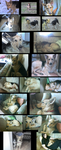 Balto collage with videos by UKthewhitewolf