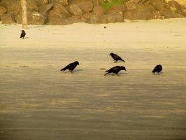 Crow 4 -- Sept 2009 by pricecw-stock