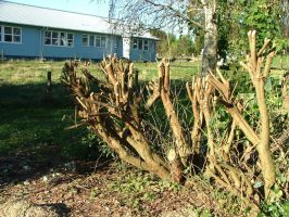 Extreme pruning by Ziblink