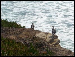 Seaguls. by blondy0262