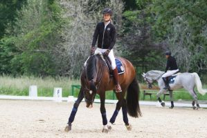Lusitano Warmup Trot Stock by LuDa-Stock
