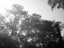 Sunshine on Trees B+W by Rindelle
