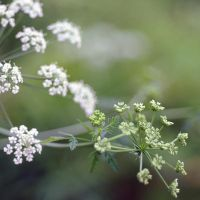 lovely weeds by MorkOrk