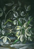 Snowdrops At Night by JoannaBromley