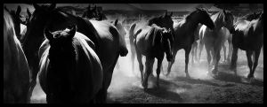 Rockley Rodeo 15 by engaged-vacancy