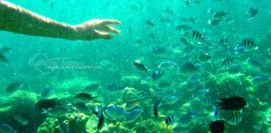 under the sea. by kathero3