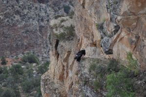 Something Witty About Condors by RajaHarimau98