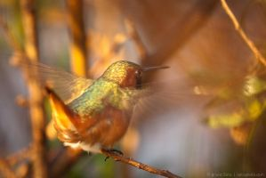 Ready to fly by isotophoto