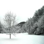 Winter Textures by TimLaSure