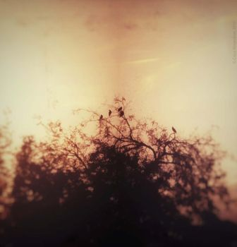 birds and branches II by CocoKingsolver
