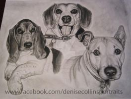 3 dog pencil portrait by FlyingFancy1