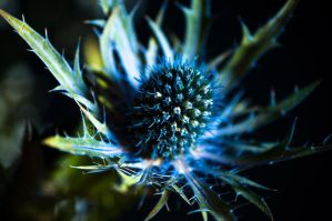Spikes in Blue by taffmeister
