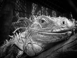 Old Dragon b+w... by MichiLauke