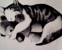 Cat Nap by hawkke