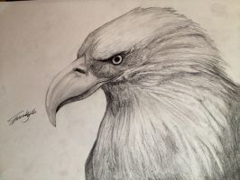 Eagle by Rynaca