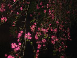 Bougainvilleas at Night by AbstractWater