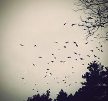 Crows by marteczna