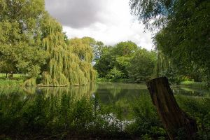 Reflections at The Vyne by parallel-pam