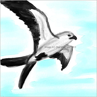 Swallow Tailed Kite - digital by Morgan-Michele