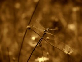 Insects by slevendar