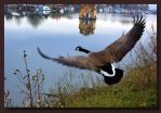Goose by Riverine