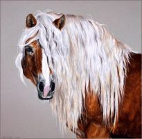 Drawing-Haflinger horse by Ennete