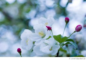 Cool White Spring by butterfly36rs