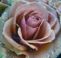 Raindrops and Roses by Ph0t0-girl