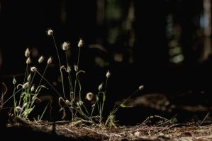 A ray of the sunshine in the forest V by AlejandroCastillo