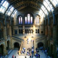 Natural History Museum by SharkySPN