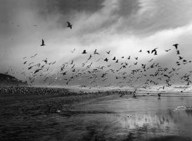 birds by VaggelisFragiadakis