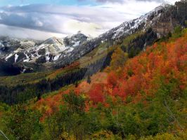 Fall Colors Near Sundance Ski by houstonryan