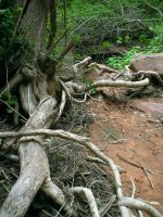 liddell-stock moab tree roots by Liddell-Stock
