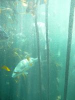 Kelp Forest 3 by Confussed-Stock