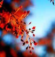 changing seasons. by Whole-Heartingly