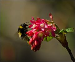 Pollen addict by LiveInPix