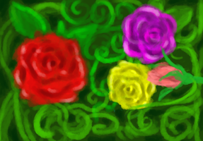 roses by cnick55