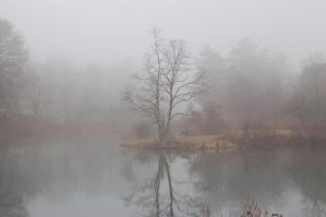Foggy morning II by CharacterSet