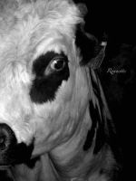 Vache and cow 2 by Rounette