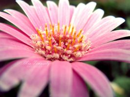 botanical pink by UnforgettableMemory