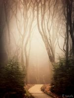 The Ghost Trail by tvurk