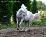 Alison - Stock 12 by Horses--Stock