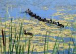 Ducks in a row... by smfoley