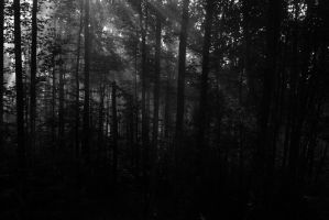 B&w Morning In The Forest by 1Imagination2Hands