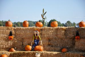 Pumpkin Patch 002 by JustmeTD