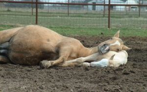 Foal pillow by ChesneyCat
