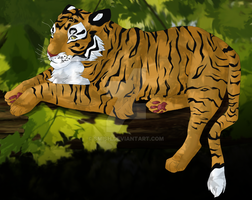Treetop Tiger by smish